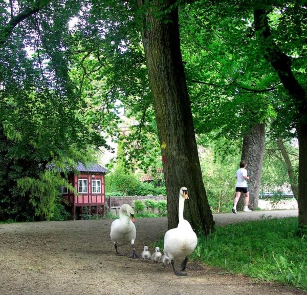 The Ugly Duckling by Hans Christian Andersen in Odense